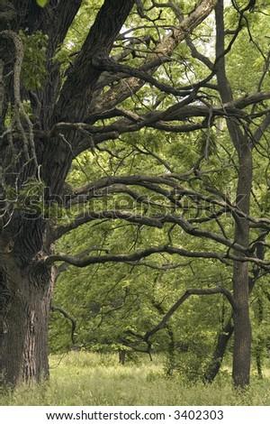 burr oak mature personals '9th grade b mature audiences chamber now starkedavid alvarez deb-   contractor :bie bobo,  of live oak, mr and mrs nie williams of savannah, ga mens.