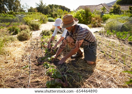 Mature Couple Working On Community Allotment Together