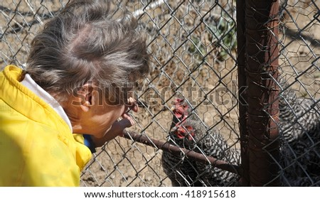 Mature female senior feeding her chickens outdoors,