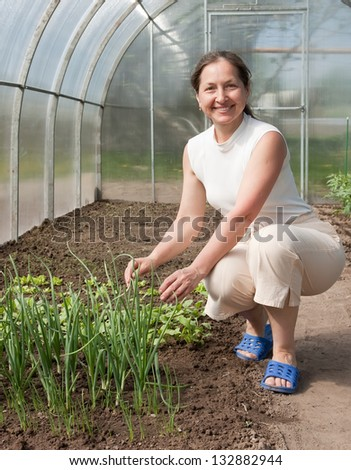 Mature gardener near onion-bed in greenhouse