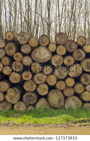 Mature tree logs in a forest stacked on the grass next to a pathway - stock photo