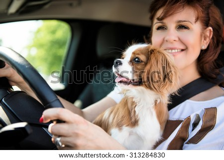 Mature woman and her cavalier dog together behind steering drive car - stock photo