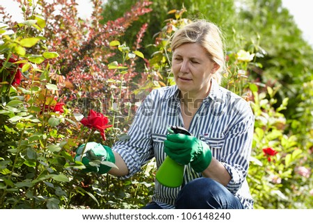 Mature woman look after her garden, spray water over red roses using green bottle - stock photo