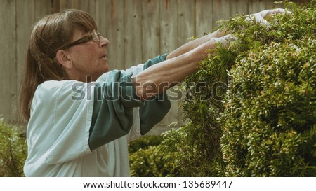 Mature woman trimming landscape shrubbery, image has retro treatment.