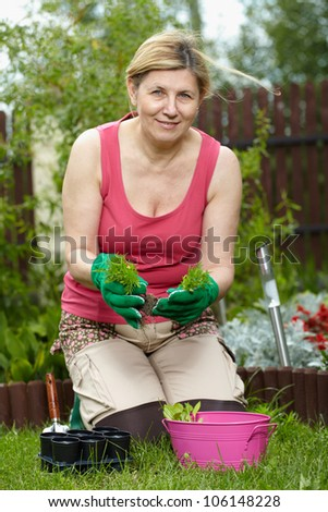 Mature woman works in her garden, splits some new plants