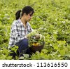 mature women checking her basket full of vegetables in bean field - stock photo