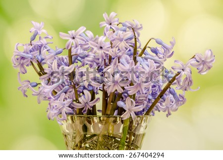 Mauve Hyacinthus orientalis flowers (common hyacinth, garden hyacinth or Dutch hyacinth) in a transparent vase, close up, green gradient background - stock photo
