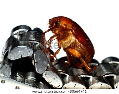 May bug and watch - stock photo