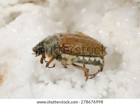 maybug, crystals - stock photo