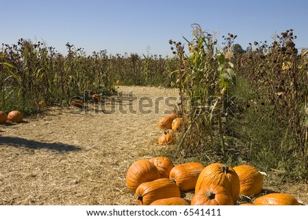 Maze entrance with pumpkins - stock photo