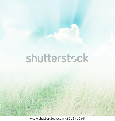 Meadow and blue sky during the day background for design. - stock photo