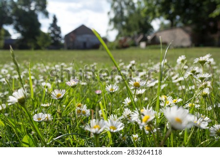 meadow and flowers - daisies on grass - garden and house background