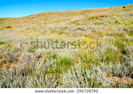 Meadow at Florissant Fossil Beds National Monument - stock photo