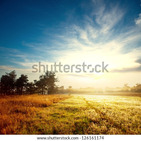 meadow at sunset - stock photo