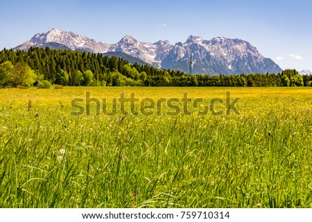 Meadow at the Karwendel mountains in the alps of Bavaria