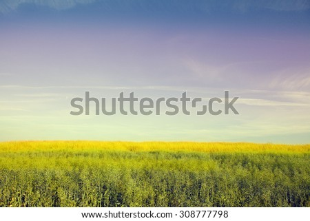 meadow beautiful - stock photo