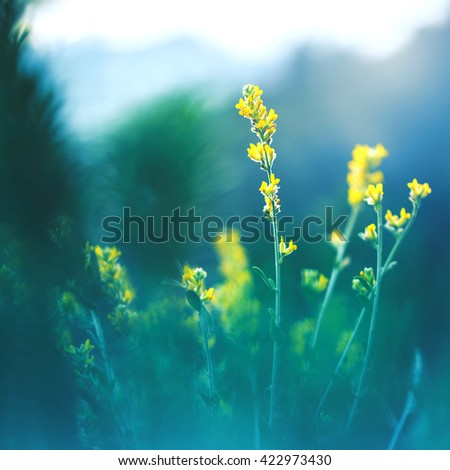 meadow beautiful yellow flowers on natural mystery dark green background in forest. Morning fresh outdoor summer photo - stock photo