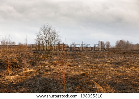 Meadow black charred after the fire - stock photo
