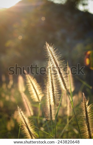 meadow close up in morning sun light.Back light of meadow. - stock photo