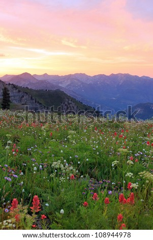 Meadow filled with wildflowers, Wasatch Mountains, Utah. - stock photo