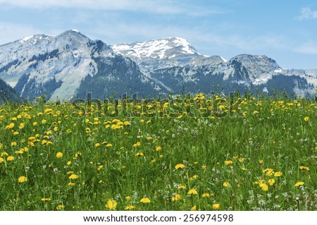 Meadow, flower field and mountain alps in Switzerland - stock photo