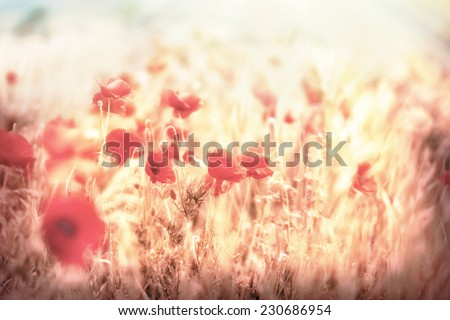 Meadow flowers - beautiful meadow - stock photo
