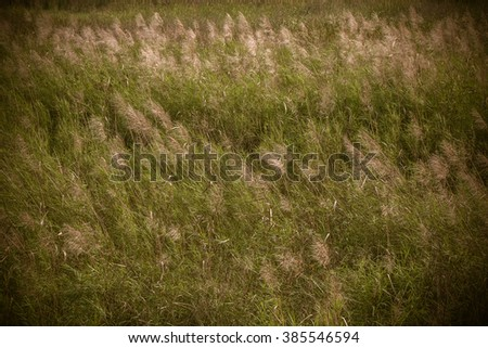 meadow flowers in early sunny fresh morning. Vintage autumn landscape for Input the text and the background. - stock photo