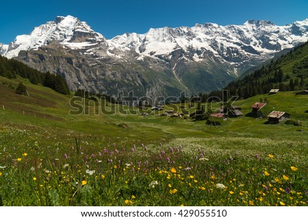 Meadow flowers on a background of wooden houses and snow-capped mountains