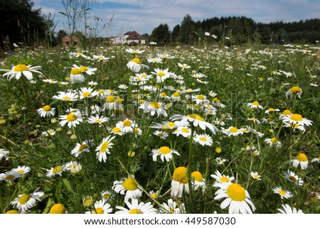 meadow full of wild flowers and lush grass - stock photo