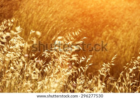 Meadow grass in the morning sun