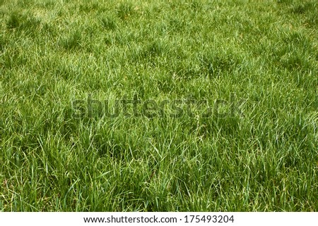 Meadow grass in the springtime in worm sunny weather - stock photo