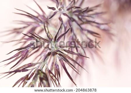 Meadow-grass macro - stock photo