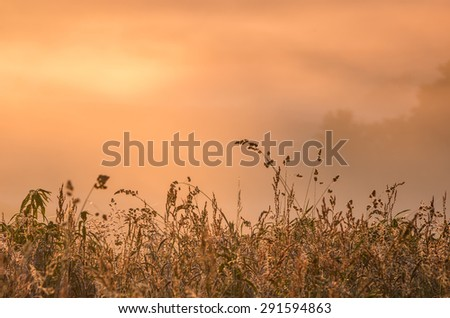 Meadow grass silhouettes with fog illuminated by the morning sun as a background