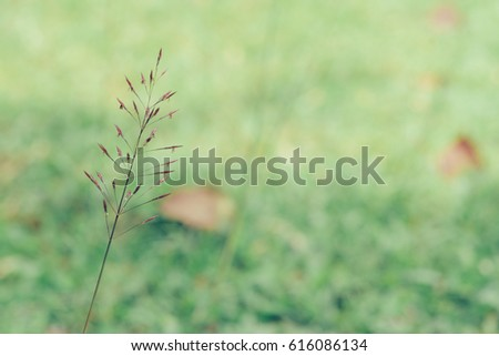 Meadow grass with common grass as background. Shallow depth of field.