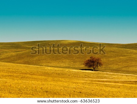 Meadow, hills and lonely small tree - stock photo