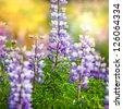 Meadow in Alaska - stock photo