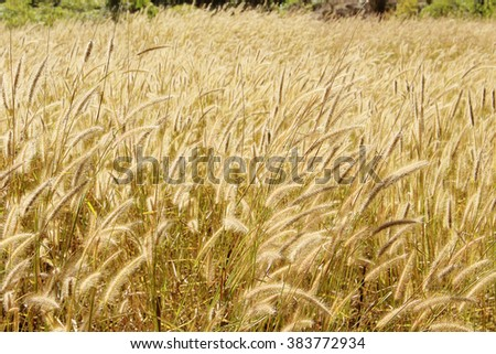 meadow in early sunny fresh morning. Vintage autumn landscape - stock photo