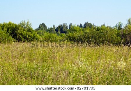 meadow in midday - stock photo