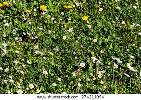 Meadow in springtime in Fislisbach, Aargau, Switzerland - stock photo
