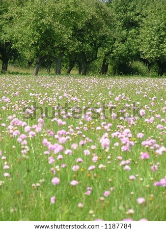 meadow in the forest - stock photo