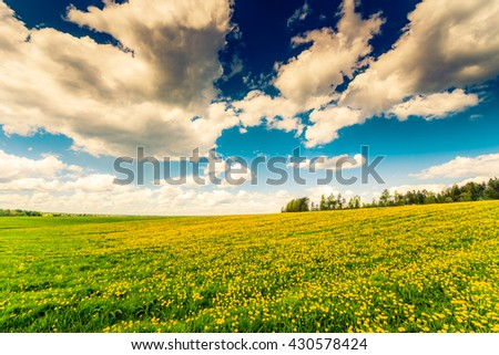 Meadow in the woods covered in dandelions on a cloudy spring day. Image in the yellow-blue toning