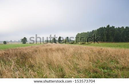 meadow landscape - stock photo