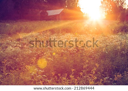 Meadow landscape at sunset - stock photo