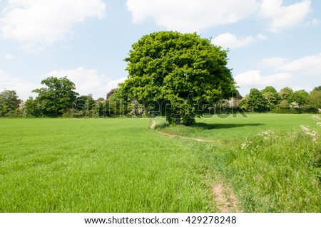 Meadow landscape of a single tree in a grassy field in summer - stock photo