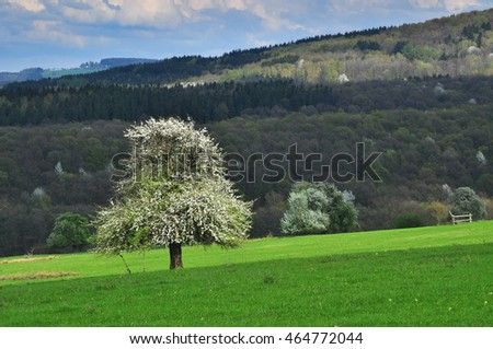 Meadow lonely fruit tree by forest, nature background