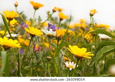 Meadow of spring flowers - stock photo