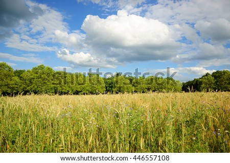 Meadow of wild flowers and golden spikes under blue sky with clouds. Selective focus on the foreground. - stock photo