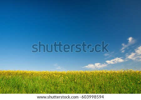 Meadow of yellow flowers on blue sky background.