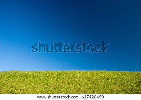 Meadow on blue sky background without clouds.