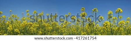 meadow panorama HQ - stock photo